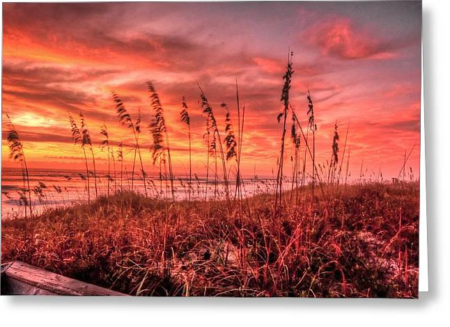 Caost Greeting Cards - Sea Oats at Dawn  Greeting Card by John Harding Photography