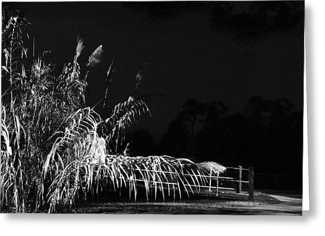 Beach At Night Greeting Cards - Sea Oats Revenge Greeting Card by Sydney m Conover