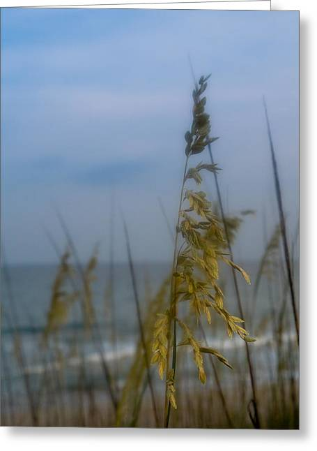 North Sea Greeting Cards - Sea Oats  Greeting Card by Shane Holsclaw