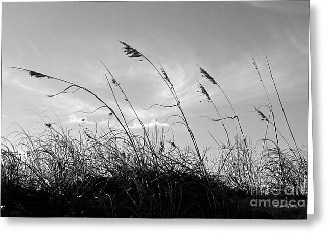 Deterrent Greeting Cards - Sea Oats Silhouette Greeting Card by Michelle Wiarda