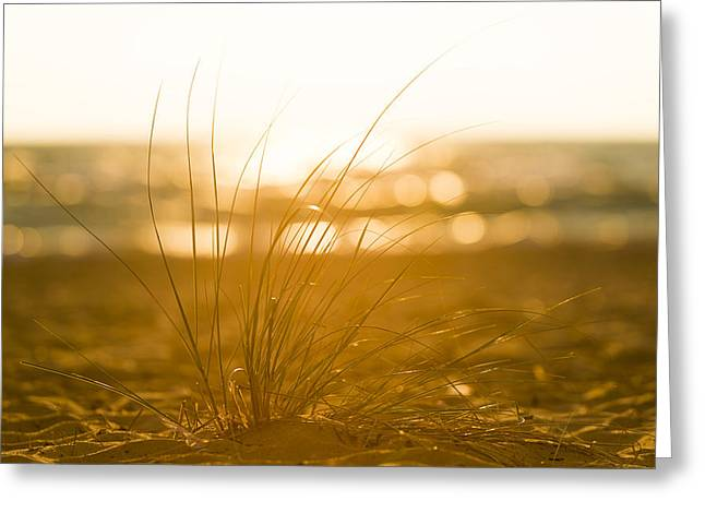 Sand Dunes Greeting Cards - Sea Oats Sunset Greeting Card by Sebastian Musial