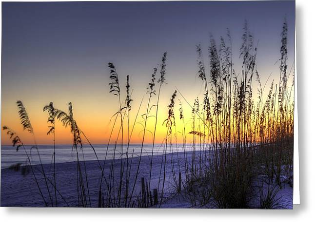 Pensacola Greeting Cards - Sea Oats Greeting Card by Tim Stanley