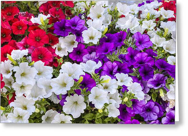Deutschland Greeting Cards - Sea of Begonias Greeting Card by Sean Allen