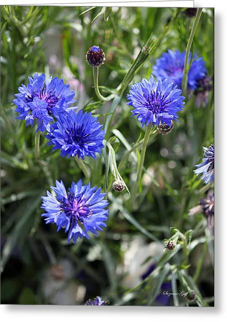 Blue Thistles Greeting Cards - Sea of Blue II Greeting Card by Suzanne Gaff