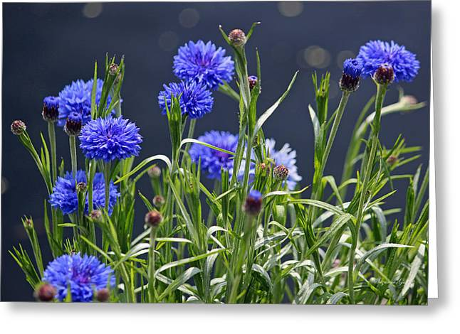 Blue Thistles Greeting Cards - Sea of Blue Greeting Card by Suzanne Gaff