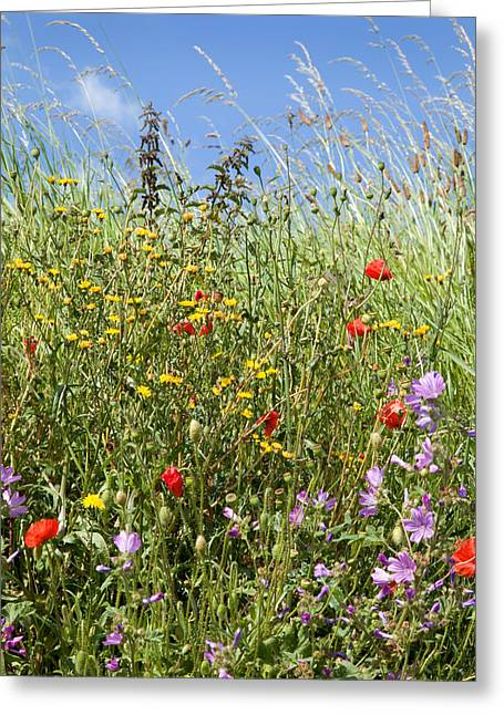 Paul Lilley Greeting Cards - Sea of colour Greeting Card by Paul Lilley