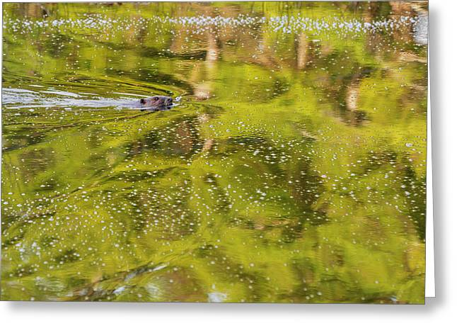 Morning Greeting Cards - Sea Of Green Greeting Card by Bill  Wakeley