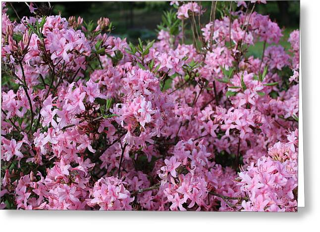 Wildfowers Greeting Cards - Sea Of Pink Greeting Card by Brian Lucia