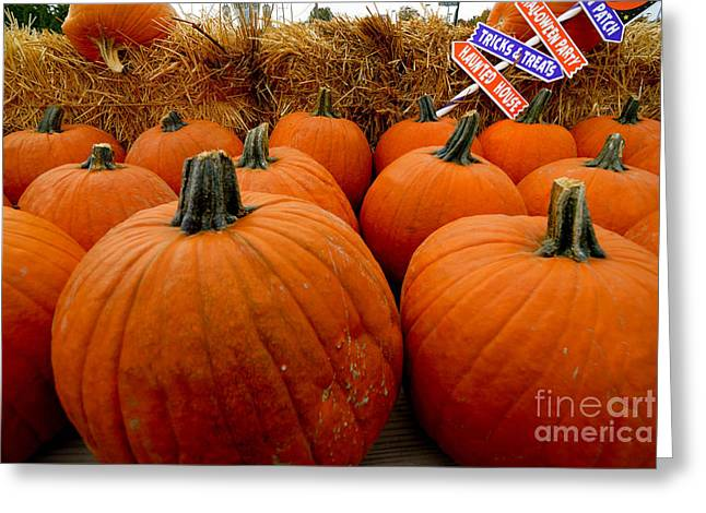 Harvesting Greeting Cards - Sea of Pumpkins Greeting Card by Amy Cicconi
