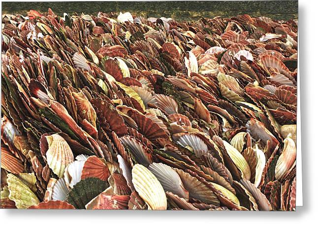 Shell Fish Greeting Cards - Sea Of Shells Greeting Card by Aidan Moran