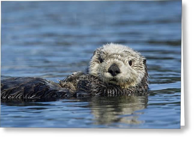 Sea Otter Alaska Greeting Card by Michael Quinton