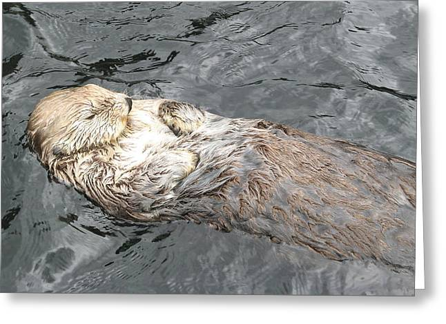 Pacific Ocean Prints Greeting Cards - Sea Otter Greeting Card by Brian Chase