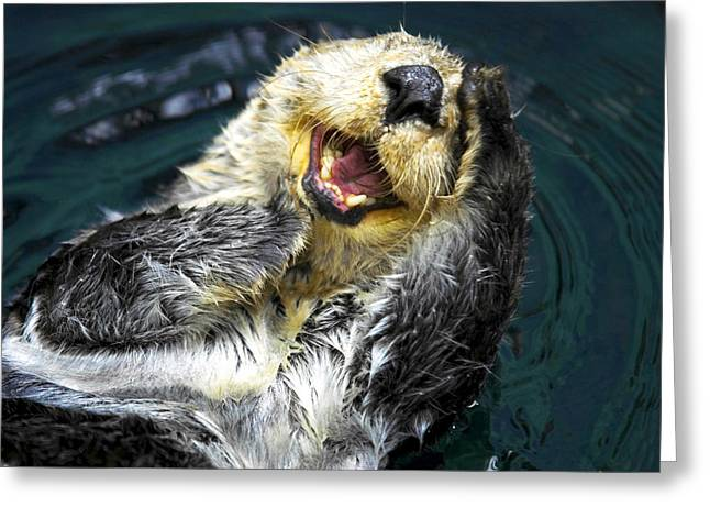 Sea Otter  Greeting Card by Fabrizio Troiani