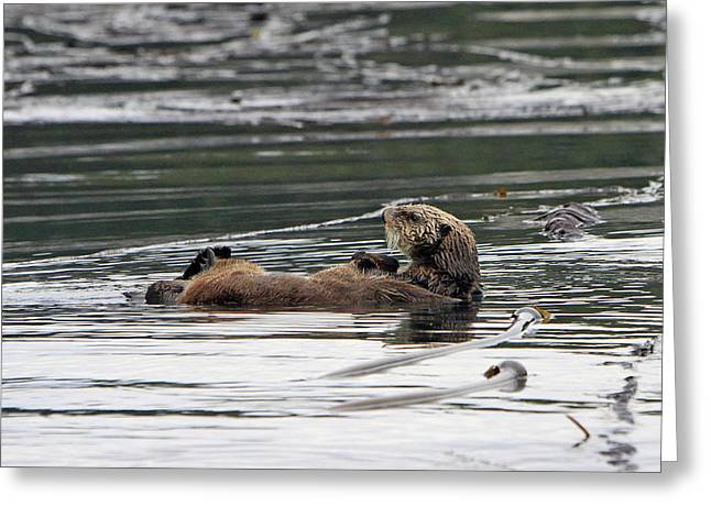 Sea Life Pyrography Greeting Cards - Sea Otter Profile Greeting Card by Shoal Hollingsworth