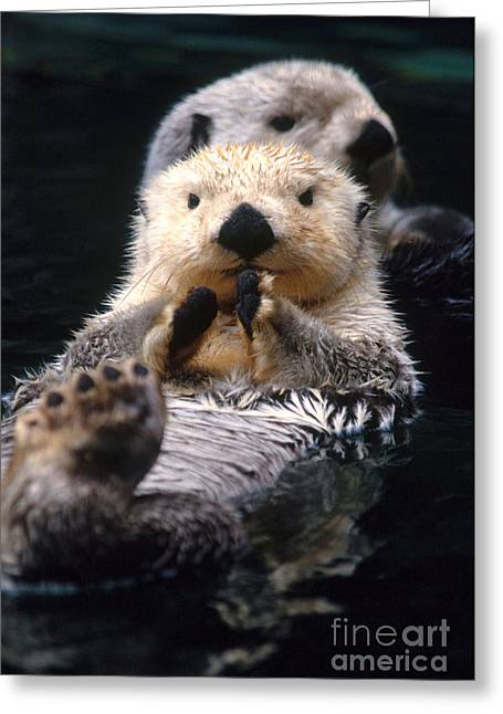 Otter Greeting Cards - Sea Otter Pup Greeting Card by Mark Newman