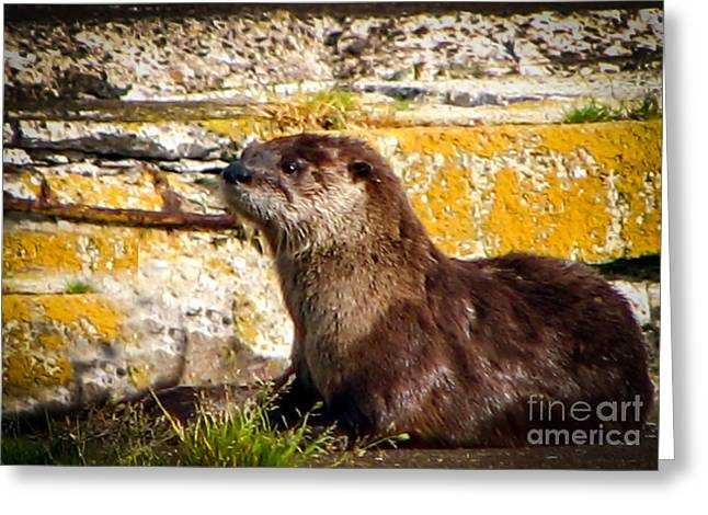 Alaska Panhandle Greeting Cards - Sea Otter Greeting Card by Robert Bales