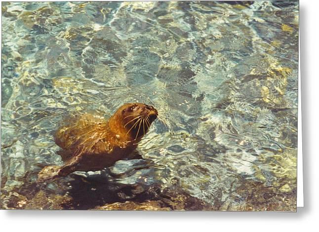Seaworld Greeting Cards - Sea otter Greeting Card by Robert Floyd