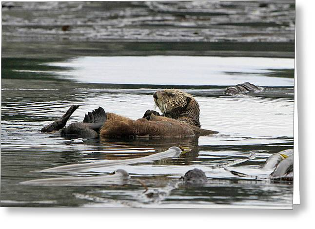 Sea Life Pyrography Greeting Cards - Sea Otter Greeting Card by Shoal Hollingsworth