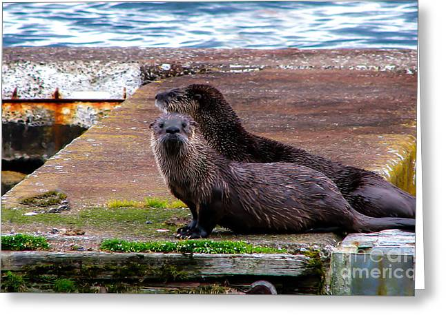 Ocean Mammals Greeting Cards - Sea Otters Greeting Card by Robert Bales