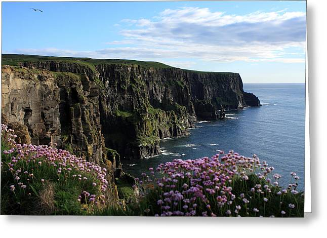 Most Visited Greeting Cards - Sea Pink On The Cliffs Greeting Card by Aidan Moran