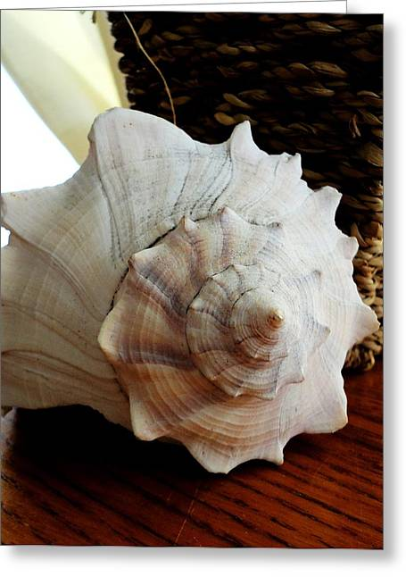 Shell Texture Pyrography Greeting Cards - Sea Shell And Basket Greeting Card by Yolanda Rodriguez
