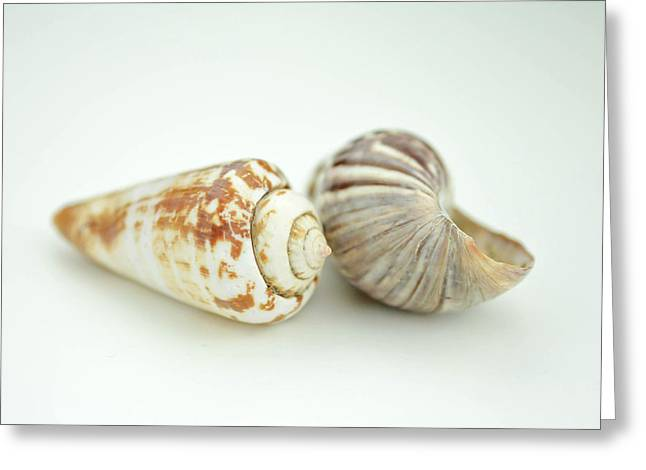 Assorted Mixed Media Greeting Cards - Sea Shell and shadows Greeting Card by Toppart Sweden