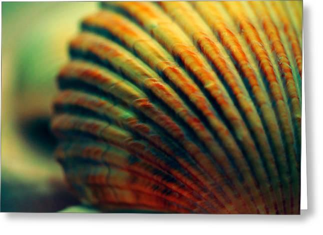 Sea Shell Art 1 Greeting Card by Bonnie Bruno