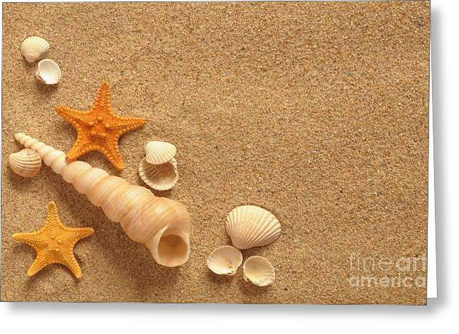 Seashell Pyrography Greeting Cards - Sea Shell Greeting Card by Boon Mee