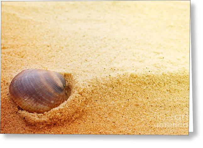 Mythja Greeting Cards - Sea shell on fine sand Greeting Card by Mythja  Photography