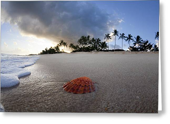 Ocean Shore Greeting Cards - Sea Shell Sunrise Greeting Card by Sean Davey