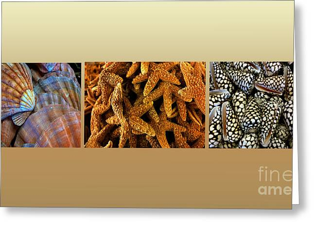 Spotted Shells Greeting Cards - Sea Shell Triptych Greeting Card by Cheryl Young