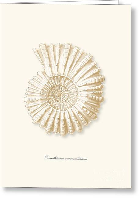 Sea Shell Drawings Greeting Cards - Sea shell white french vintage Greeting Card by Patruschka Hetterschij