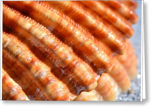 Shell Pattern Mixed Media Greeting Cards - Sea shell with deep pattern Greeting Card by Toppart Sweden