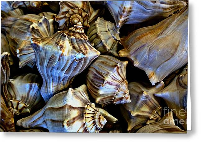 Sea Shell Art Greeting Cards - Sea Shells 2 Greeting Card by Cheryl Young