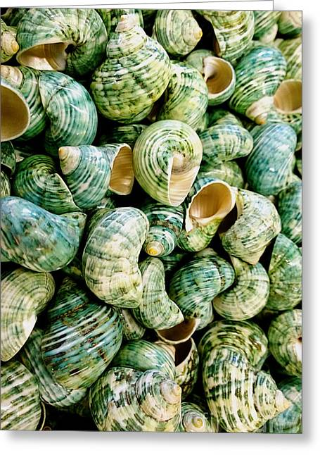 Sea Shells 3 Greeting Card by Cheryl Young