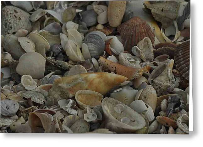 Ocean Photography Greeting Cards - Sea Shells #4 Greeting Card by Maria Suhr
