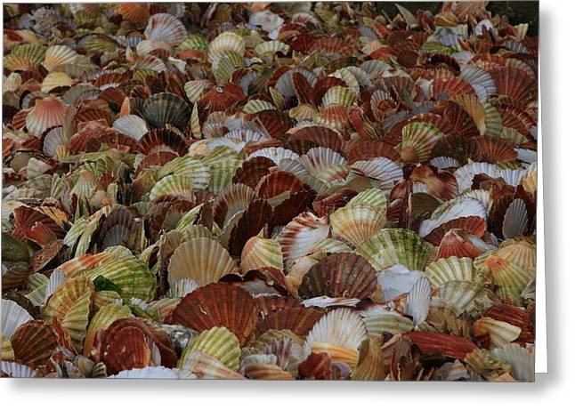 Shell Fish Greeting Cards - Seashells Everywhere Greeting Card by Aidan Moran