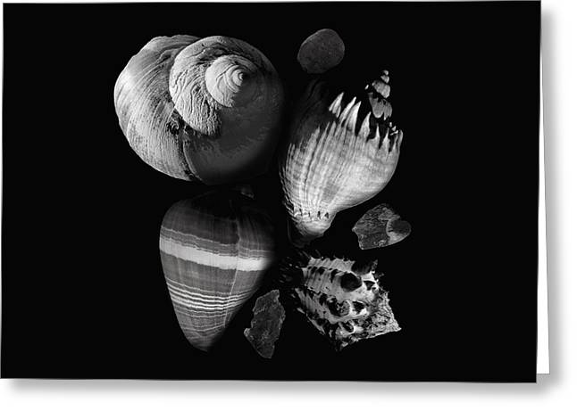 Sea Shell Art Greeting Cards - Sea Shells and Stones still life Greeting Card by Ann Powell