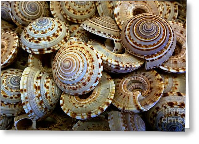 Spotted Shells Greeting Cards - Sea shells Greeting Card by Cheryl Young