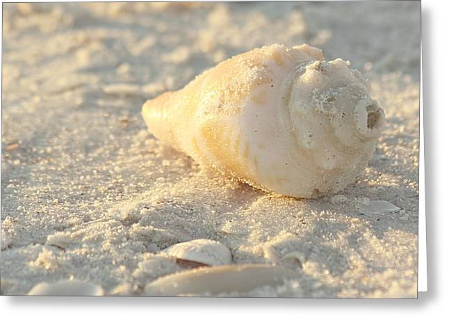 Kim Hojnacki Greeting Cards - Sea Shells Greeting Card by Kim Hojnacki