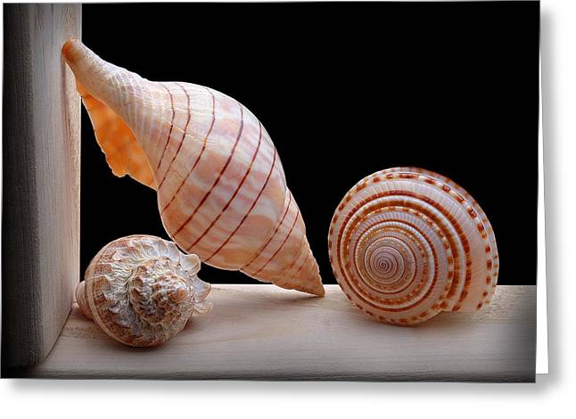 Old Camera Mixed Media Greeting Cards - Sea Shells Greeting Card by Krasimir Tolev