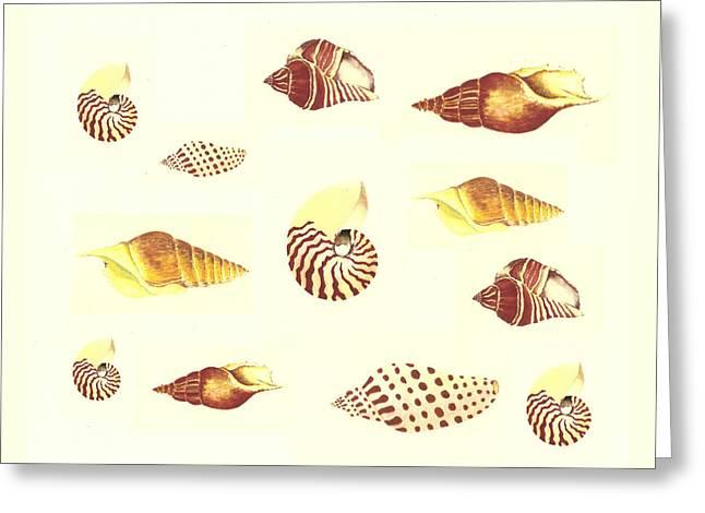 Sea Shell Art Greeting Cards - Sea Shells Greeting Card by Michael Vigliotti