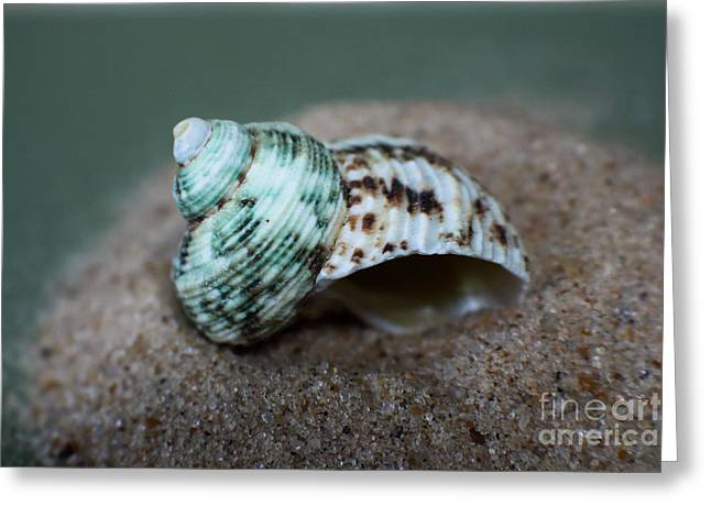 Sand Art Greeting Cards - Sea Shells Ocean Green Greeting Card by Ella Kaye Dickey