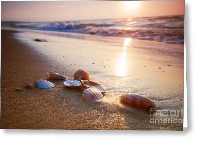 Tropical Oceans Greeting Cards - Sea shells on sand Greeting Card by Michal Bednarek