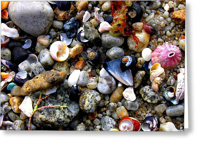 Santa Cruz Ca Greeting Cards - Sea Shells Greeting Card by Ru Tover