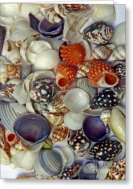 Seashell Picture Photographs Greeting Cards - Sea Shells Three Greeting Card by Skip Willits