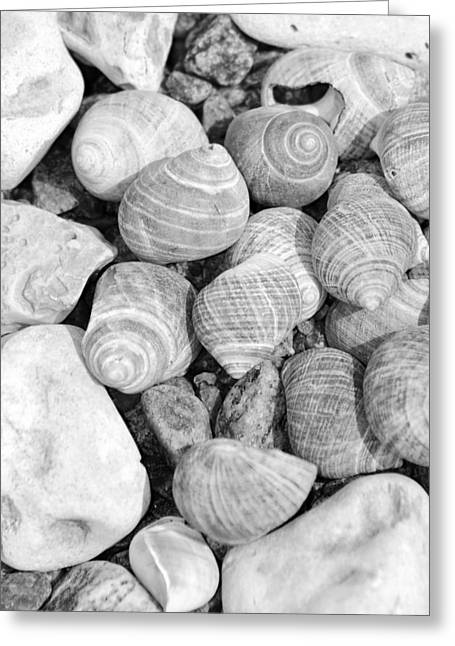Shell Texture Greeting Cards - Sea shells Greeting Card by Toppart Sweden