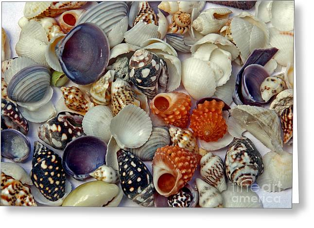 Seashell Picture Photographs Greeting Cards - Sea Shells Two Greeting Card by Skip Willits