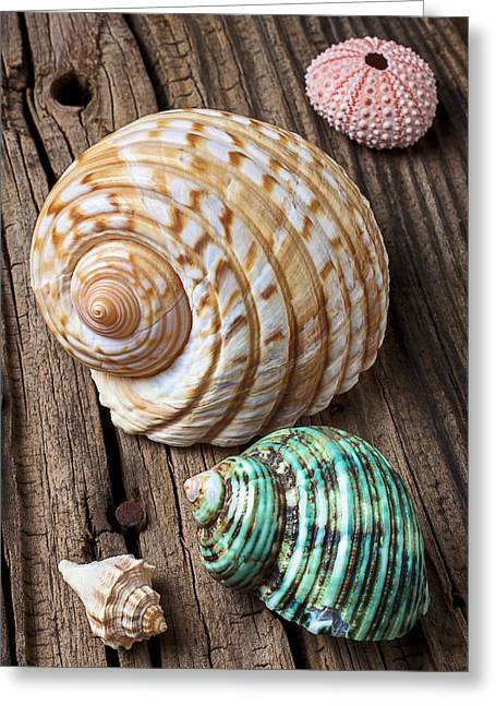 Sea Life Photographs Greeting Cards - Sea shells with urchin  Greeting Card by Garry Gay