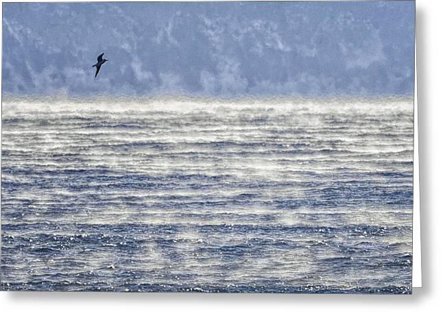 Sea Smoke And Gull Blues Greeting Card by Marty Saccone